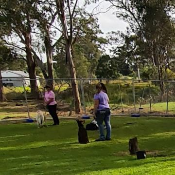 royal-rover-boarding-kennels-dog-training